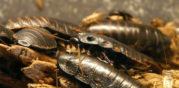 Cafards et blattes : comment s'en débarrasser définitivement
